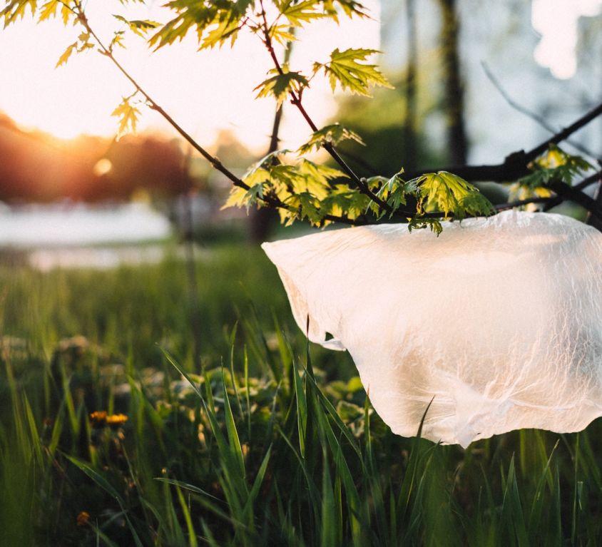 plastic bag hanging on branch